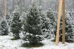 Snow-400x300_l4zyubf6